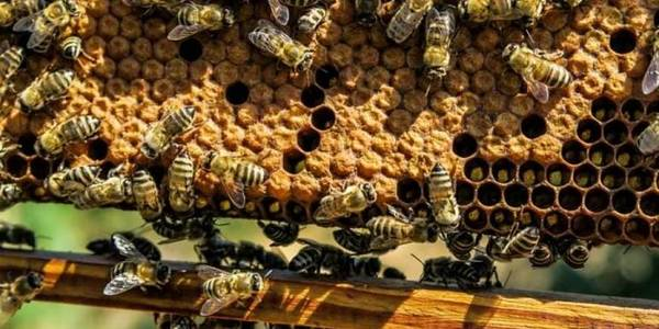 Beekeeping as component of Rukshynska AH development