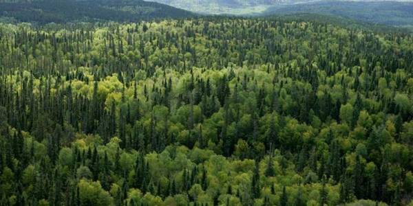 Will AHs receive millions in revenues from forests?
