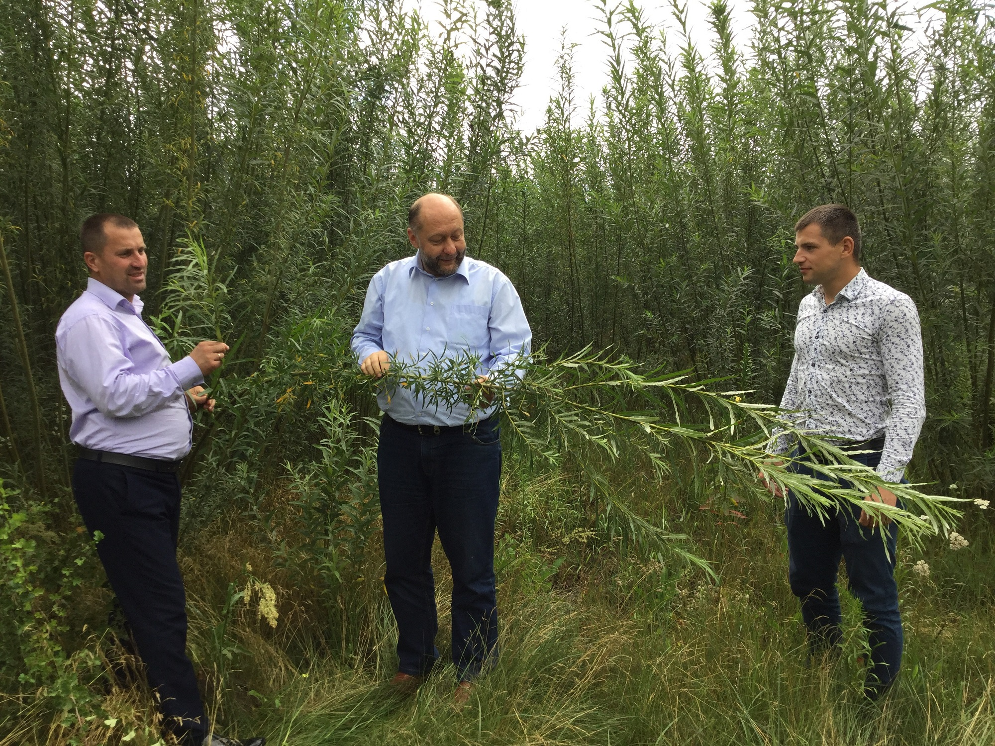 Energy willow grows in Velykomostivska AH